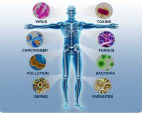 definition microbial food supplements picture 3