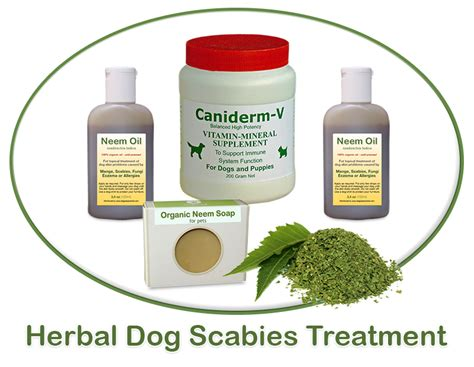 canine pain relief treatments picture 18