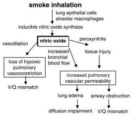 what to do for smoke inhalation picture 2