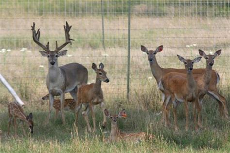 from where we get deer for deer farming picture 1