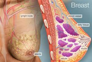 female breast development in males newsletter signup. picture 3