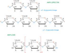 acid hydrolysis of starch picture 1