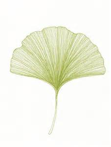 ginkgo print picture 1