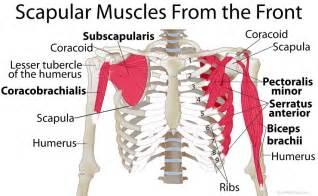 shoulder muscle pain picture 11
