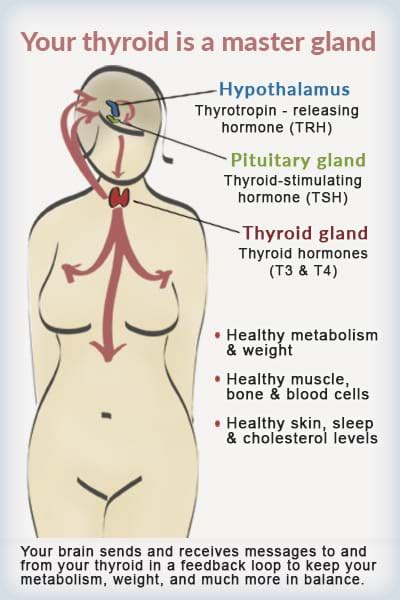 what does it mean when your thyroid is picture 10