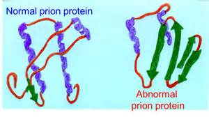 prion disease diet picture 2