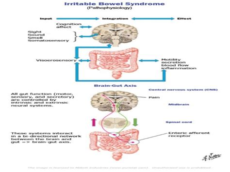 baclofen irritable bowel syndrome picture 21