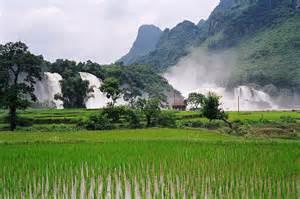 pure ginkgo cambodia picture 3