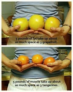 fat weight compared to muscle picture 7