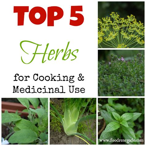 Best hot herbal herbs picture 10