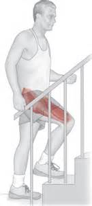 muscle used to extend hip when climbing stairs picture 1