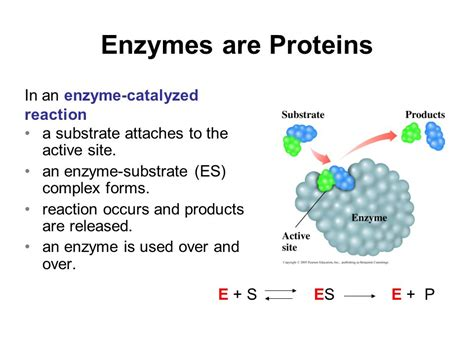amino acids enzymes and proteins that relax blood vessels picture 2
