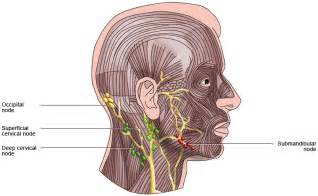 lymph nodes back of neck from acne picture 11