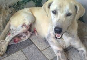 canine skin tumor picture 11