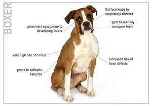 can intestinal paratism cause seizures in young puppies picture 7