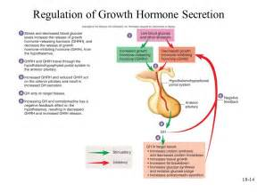 growth hormone to repair liver picture 9