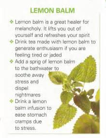 kumintang herbal plants benefits picture 10