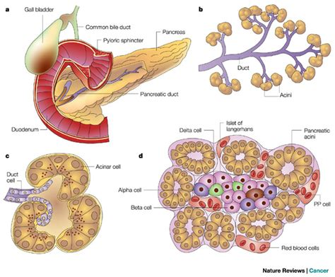 tumors of the digestional picture 1