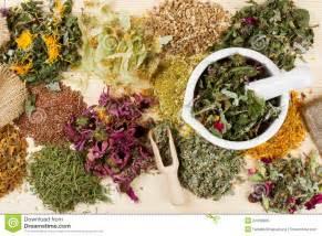 best herbal medicine website picture 9