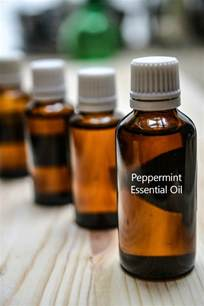 does peppermint oil repel squirrels picture 10