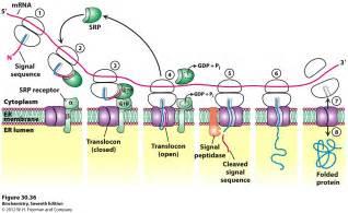 order herpenozilax remedy picture 11