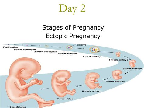 does bicham ampiclox prevent pregnancy within 24hours of picture 1