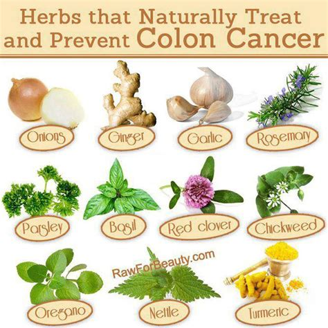 herbal cure for colon cancer picture 1