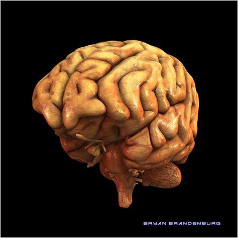 herpes simplex virus in the brain picture 4