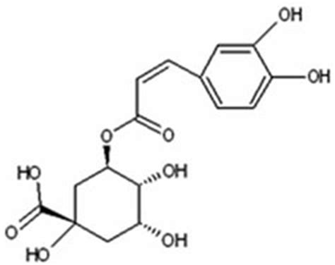 chlorogenic picture 18