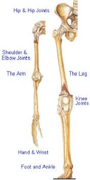joint pain in the arms picture 18