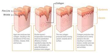 cell regeneration and skin picture 2