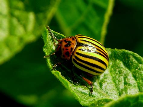 insect picture 9