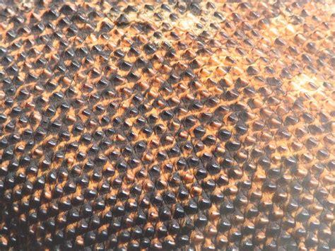 dragon skin picture 1