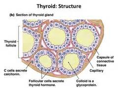 low density thyroid m picture 9