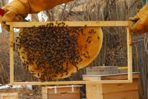 Natural Bee Hive picture 11