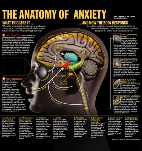 anxiety attacks in your sleep causes picture 6