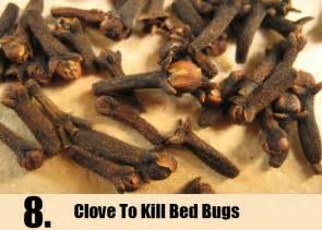 Bed bug relief picture 11