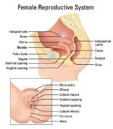 health penis ejaculating inside vagina picture 9