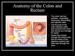 colon anatomy ppt picture 10