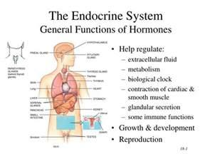 what is a hormone quizlet picture 5