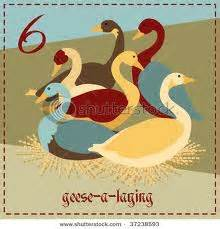 do geese have h picture 21