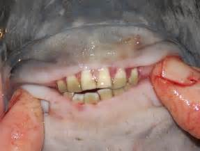 with teeth picture 5