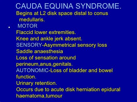 cauda equina bladder picture 10