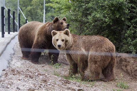 - oral bear men peperonity picture 2