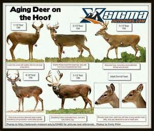 deer antler and big s picture 5