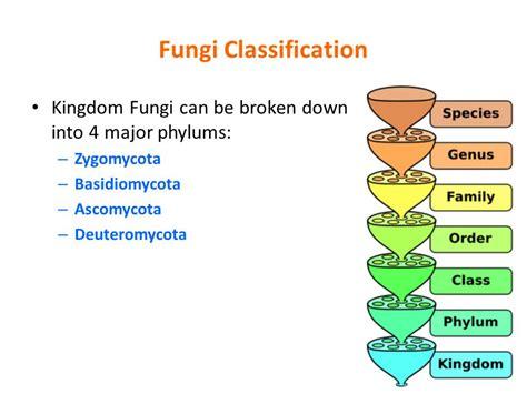 classified fungi picture 5