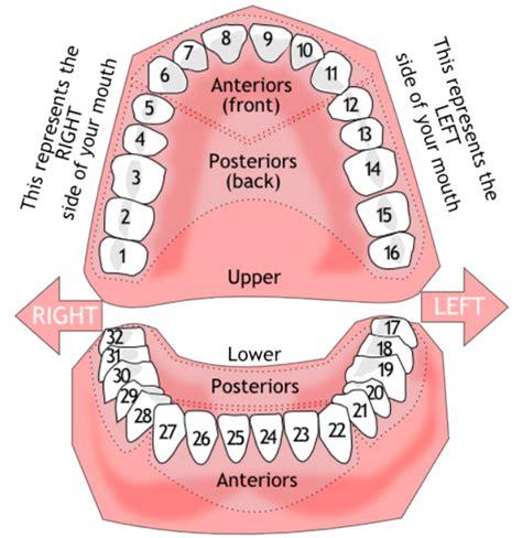 boniva and teeth picture 14