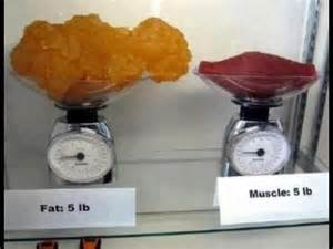 fat weight compared to muscle picture 11