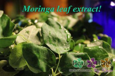 hw do one locally use herbs like moringa picture 7