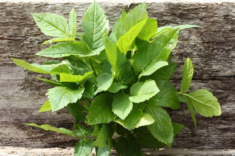 herb tea male enhancement picture 2